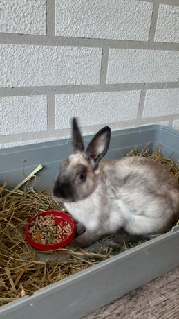 Отдам даром кролика