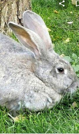 Продам  кроликов  разных  возрастов