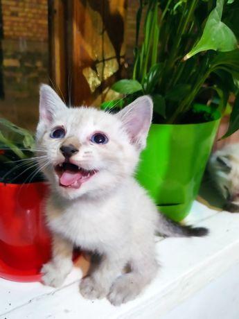 Котяты в хорошие руки