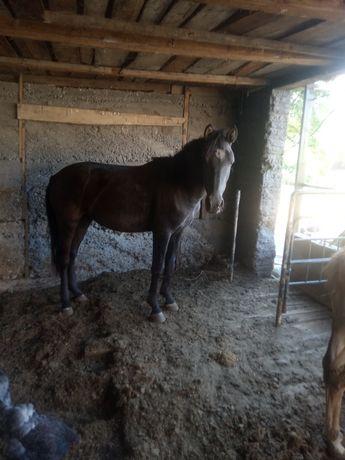 Продается лошадь.