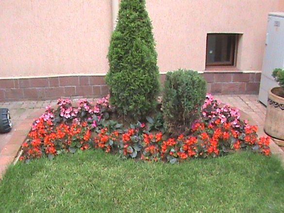 Поддръжка на дворове и градини ( РЕЗИТБА НА ОВОЩНИ ДРЪВЧЕТА )