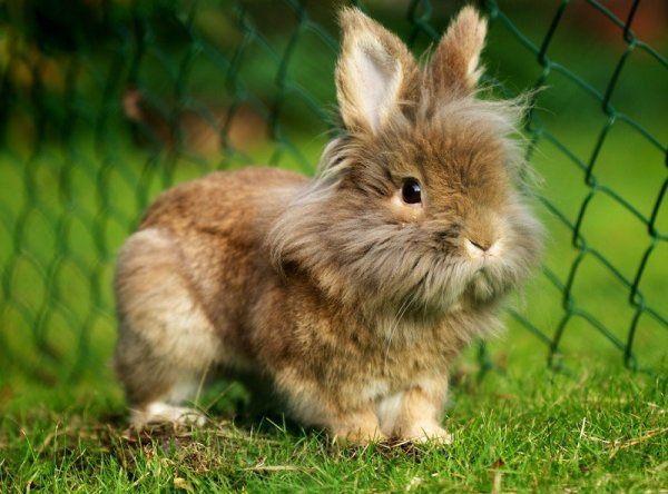 Карликовые молоденькие кролики