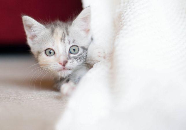 Котенок девочка милочка.