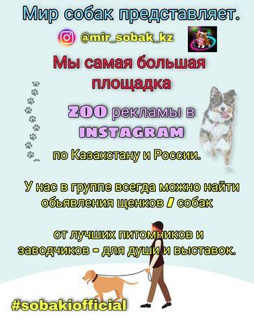 Собаки щенки группа в инстаграмме