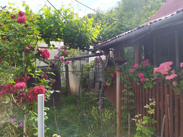 Vând Cabană + Grădină preț negociabil