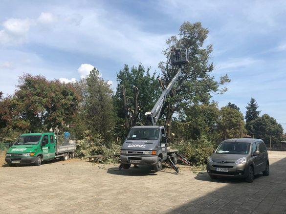 Рязане на дървета , Косене на трева, почистване на терени Варна гр. Варна - image 2