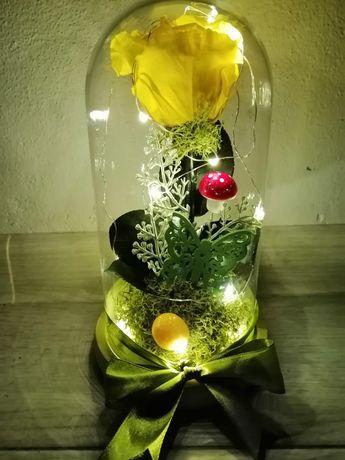 Trandafiri criogenati în cupola cu leduri ideea perfectă de cadou