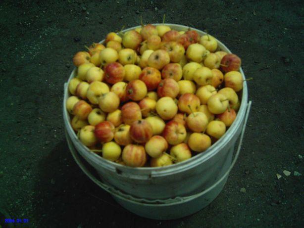 Яблочки МЕДОВКА На Варенье,Повидло,Компот,  Сладкие Не Кислые