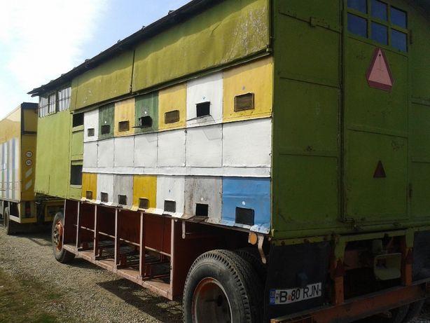 Lichidare stupina-URGENT Vand/schimb cu auto pavilion apicol