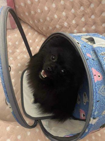 Раница за малко куче
