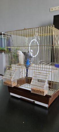 Продам попугаев вместе с клеткой, мальчик и девочка