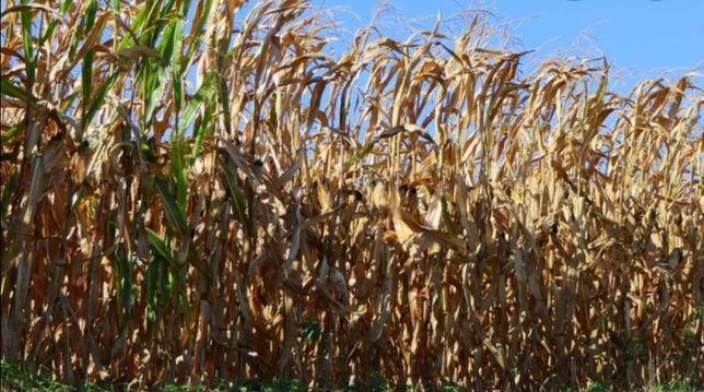 Teren agricol în gottlob