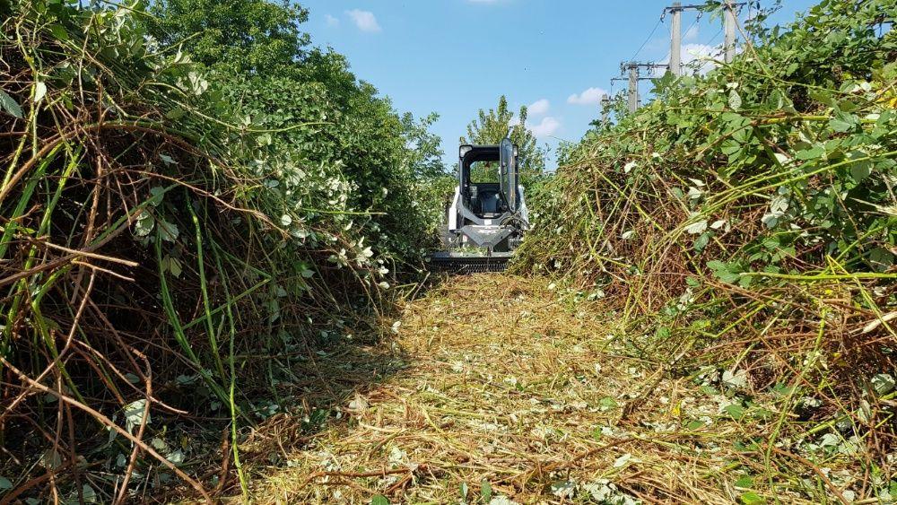 Cosire curatare defrisare tocare iarba arbusti rugi ambrozie