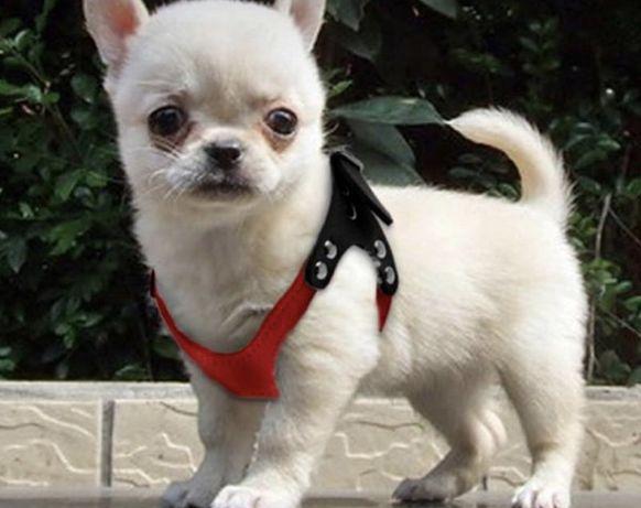 Шлейка для собак мелких пород, S р-р
