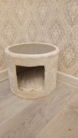Продается кошка породы шотландский-прямоухий.