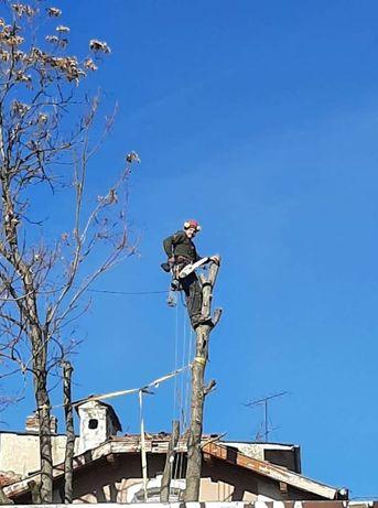 Арбористи-Алпинисти.Рязане на опасни дървета