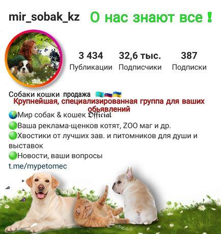 Продать купить щенка на крупнейшей инстаграм группе по всему казахстан