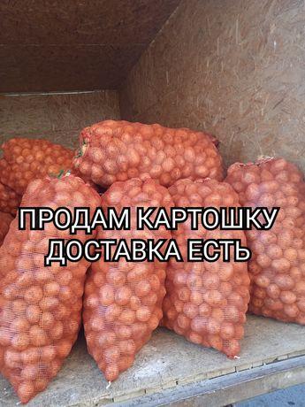 Картофель Сорт -Гала и Морковь,Лук