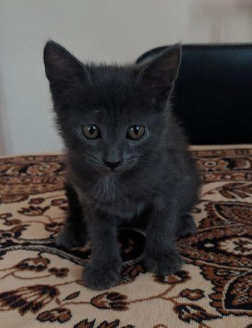 котята в ответственные руки