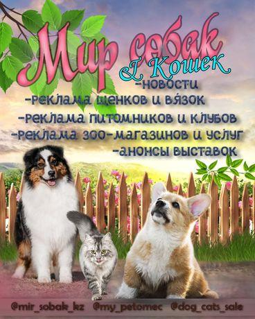 щенки котята доска обьявлений по казахстану