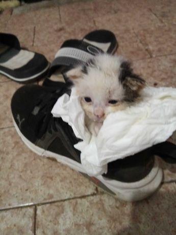 Pisicuta găsită pe strada are câteva zile