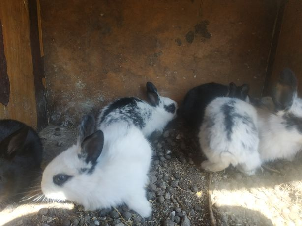 Крольчата по 1000т