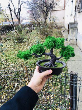 Bonsai copacel copac licheni naturali stabilizati