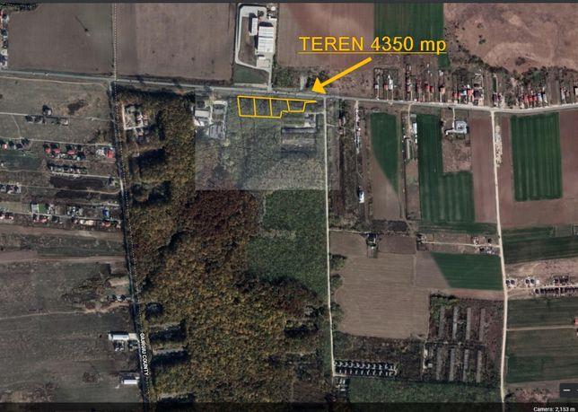 Teren Dragomiresti Vale direct proprietar 4 350 mp
