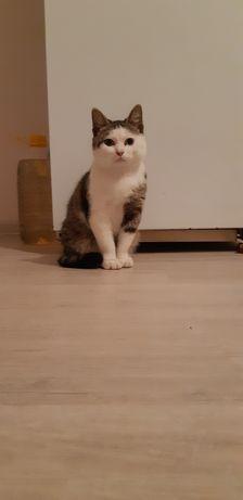 Отдам в добрые руки кота в связи с переездом