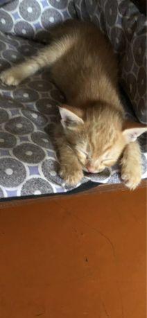 Котенок- мальчик