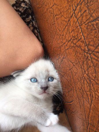 Отдам котёнка в заботливые добрые руки