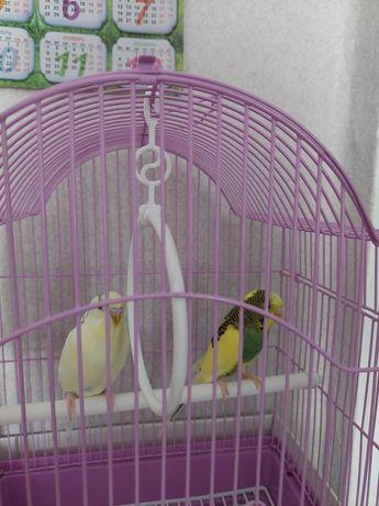 Продам попугаев мальчик,девочка