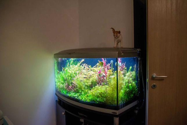 Plante naturale acvariu