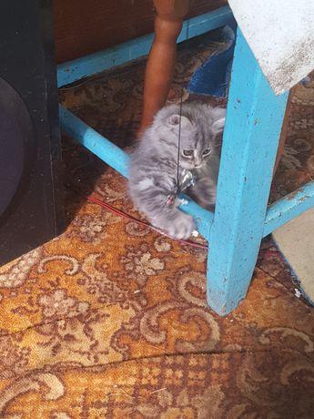 Котёнок девочка (диковатая) бесплатно