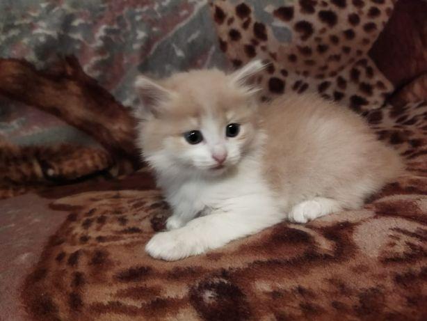 Котёнок маленький