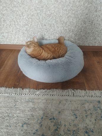 Продам лежанку для кота или кошечки