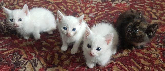 Котята в поисках хозяев