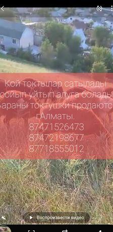 Койлар токтылар сатылады Касапшы бар сойып уйтып алуга болды г Алматы
