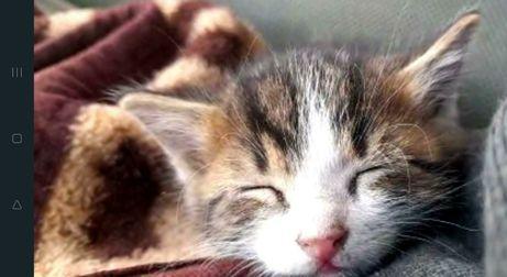 Маленький милый котенок