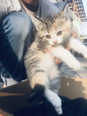 Мысык алматы котенок алматы