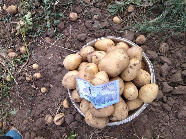 Продам картофель доставка