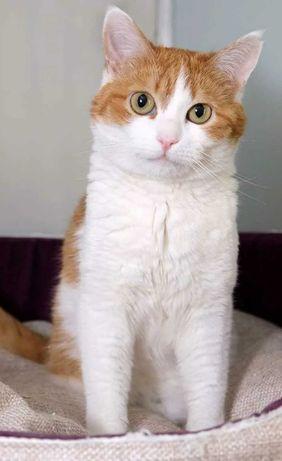 Котик!!! Молодой и кастрированный!!!