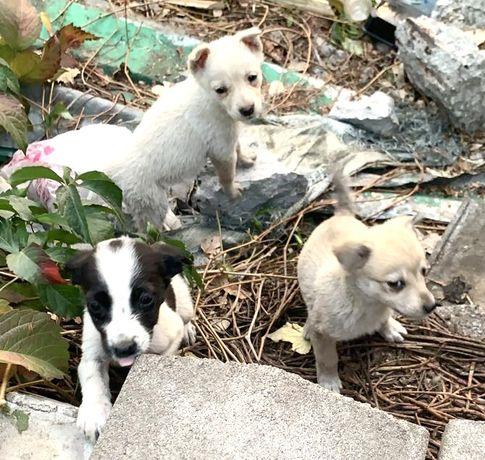 Маленькие хорошенькие домашние щенки ,брошенные на улице, ждут Вас
