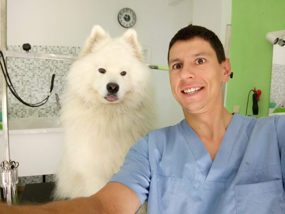 Подстригване на кучета - кв. Младост