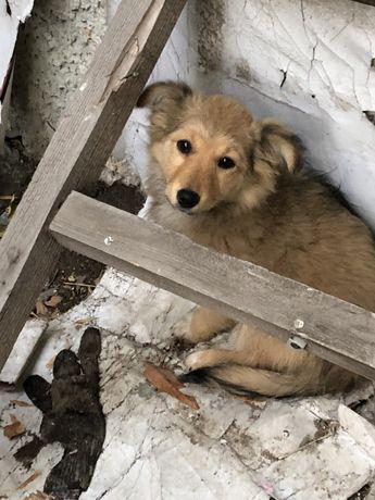 Спасем щеночка
