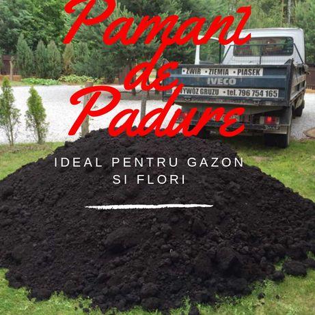 Pamant Vegetal Pentru Gazon si Flori Amestecat Cu Chisai (nisip fin)