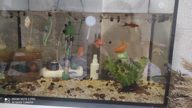 Продам аквариум 35 л с рыбками