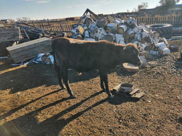 Продам скот