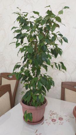 Разные, комнатные растения