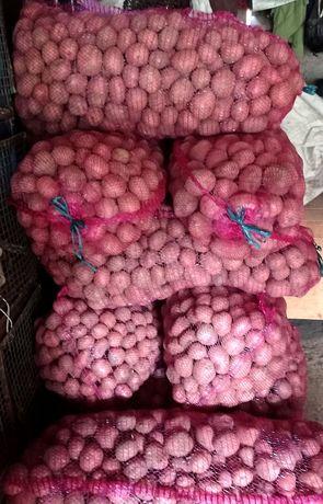 Vand cartofi rosii
